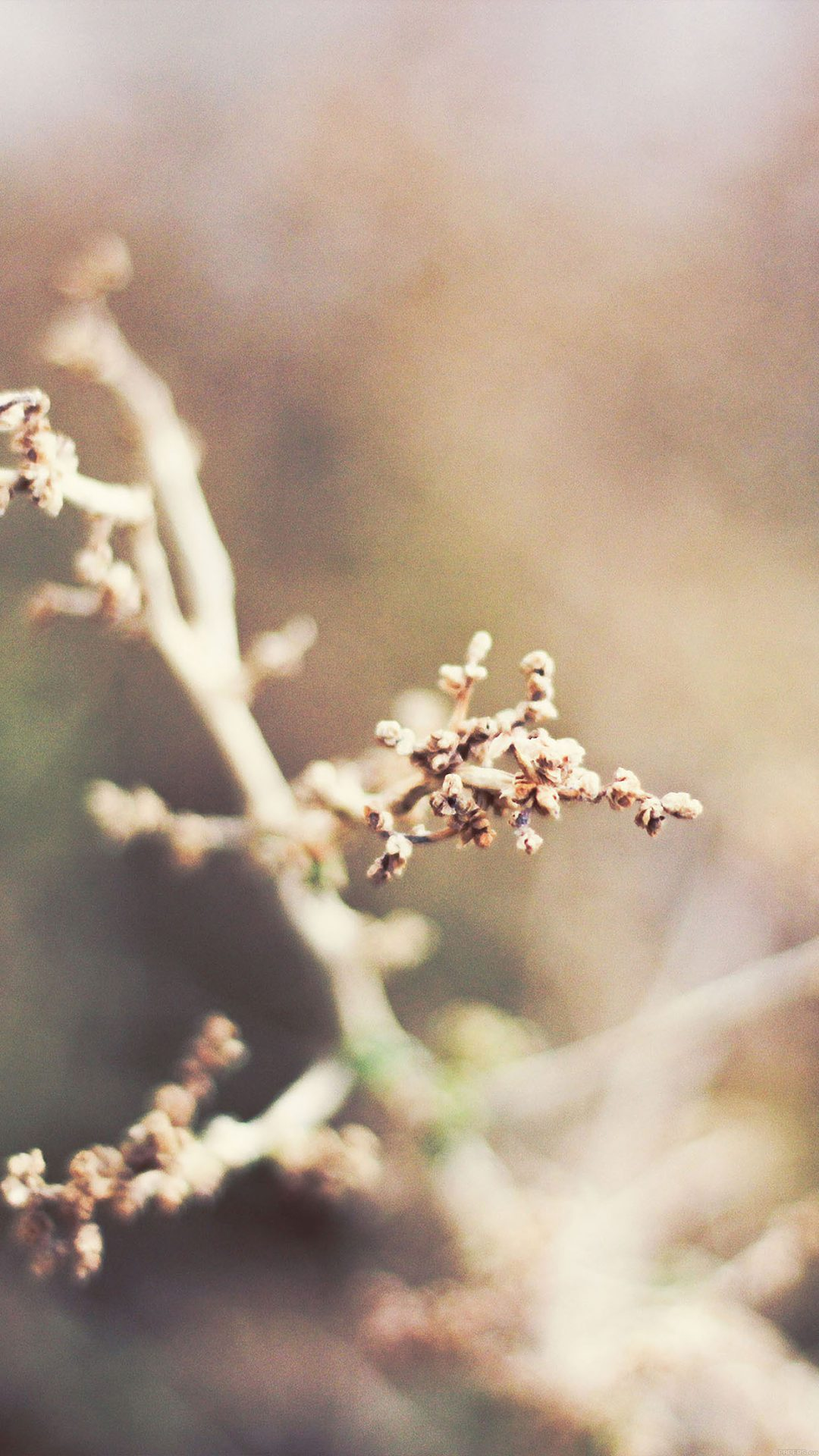 Blossom Flower Nature