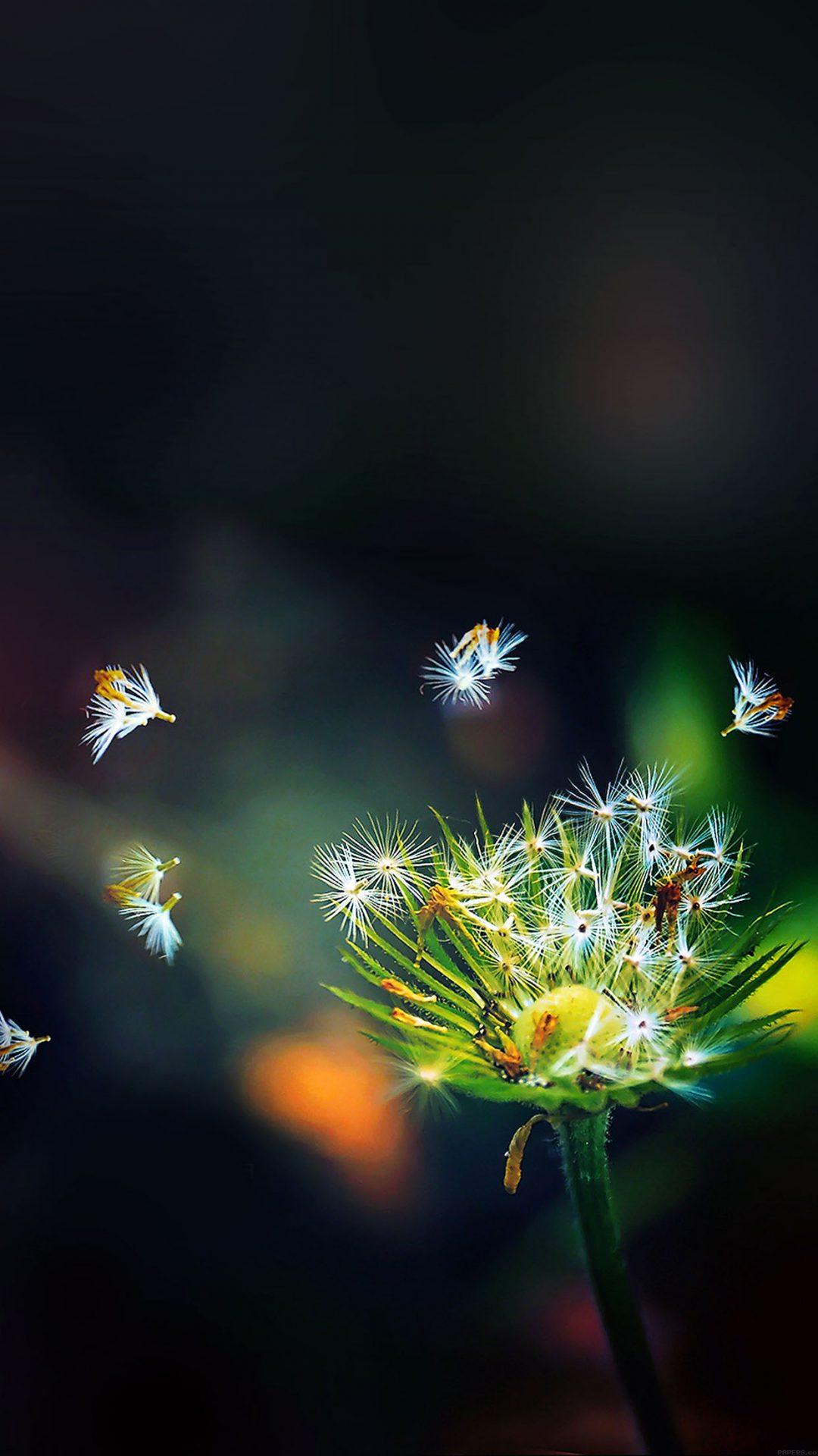 Blow Dandelion Flower Nature
