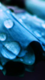 Blue Flower Bokeh Rain Nature