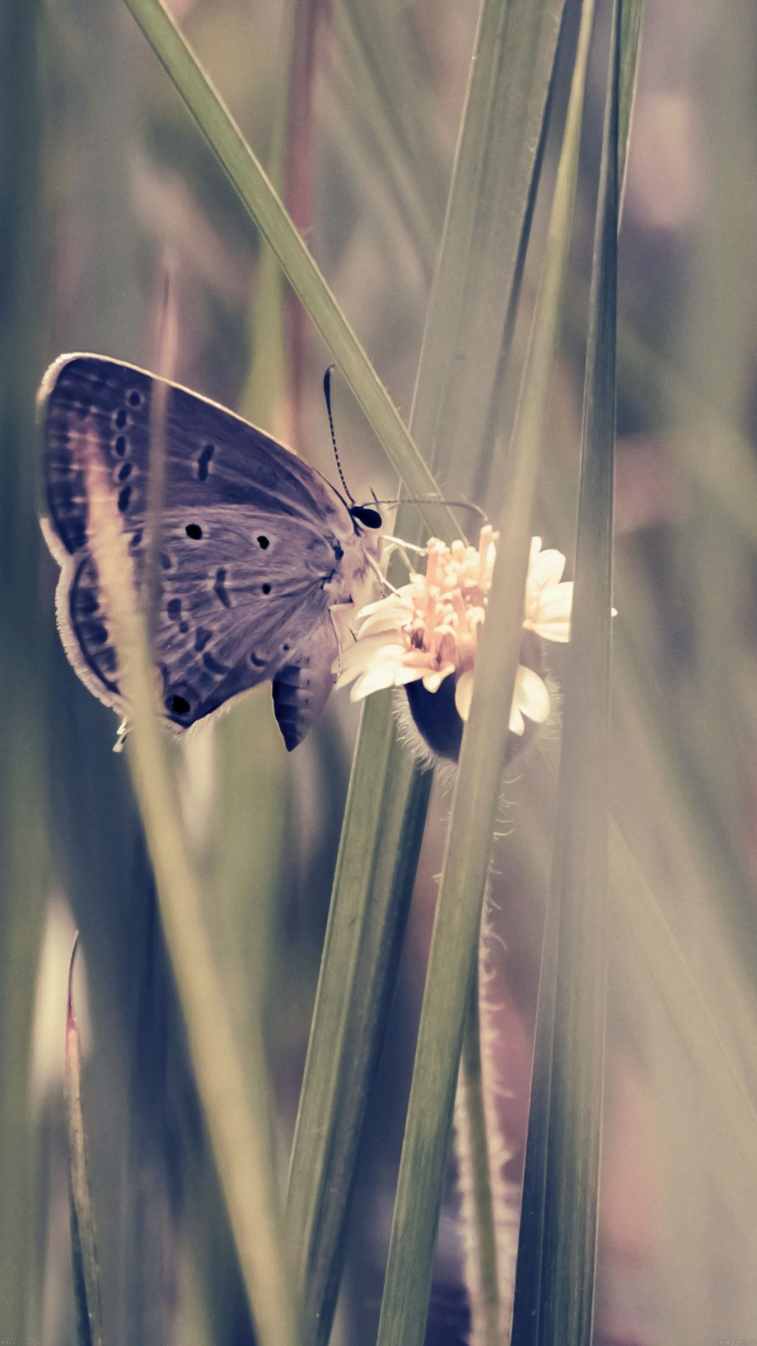 Butterfly Eating Time Blue Nature