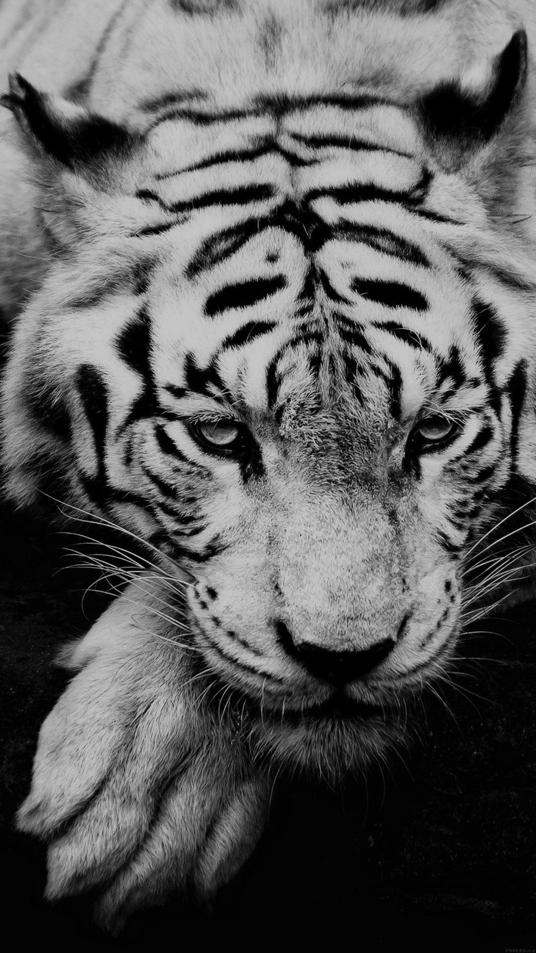Bw Dark Tiger Animal
