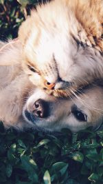 Cat And Dog Animal Love Nature Pure