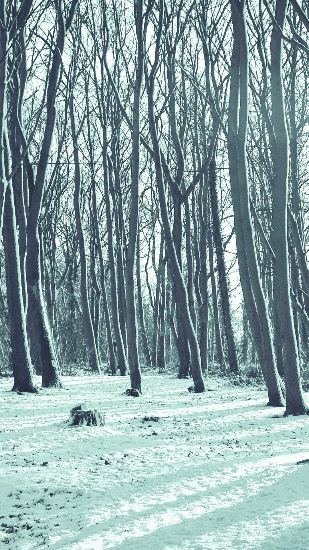 Cold Winter Forest Snow Nature Mountain Blue
