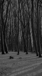 Cold Winter Forest Snow Nature Mountain Dark Bw
