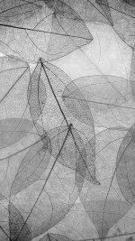 Dark Bw Leaf Art Fall Nature Pattern