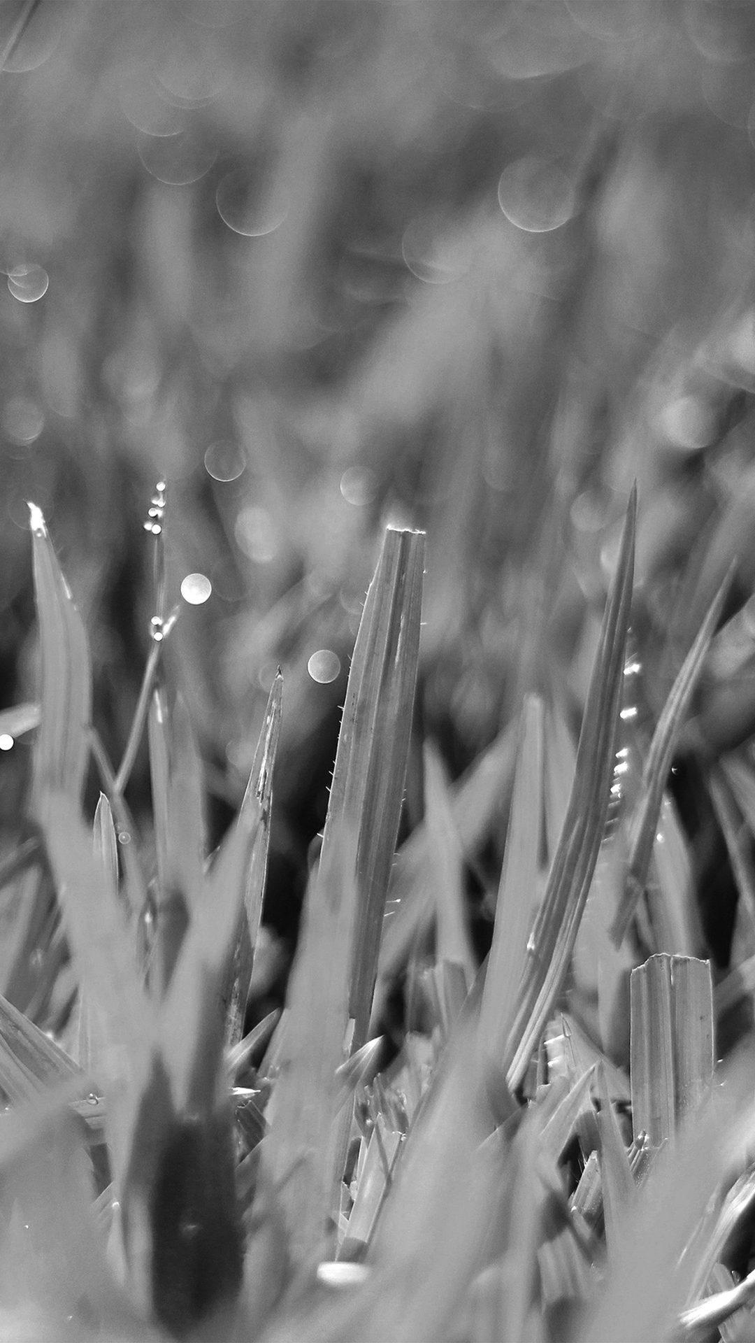 Dark Leaf Lawn Flower Nature