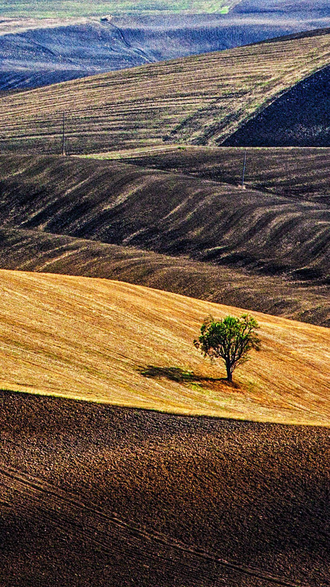 Desert Farm Nature Tree Lonly