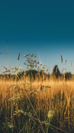 Fall Field Nature Flower Reed Sunny