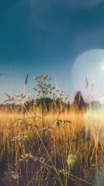 Fall Field Nature Flower Reed Sunny Flare