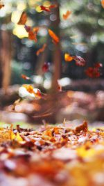 Fall Leaves Nature Tree Year Sad
