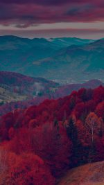 Fall Mountain Fun Red Tree Nature Dark Beautiful