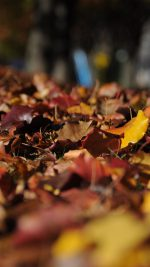 Fall Mountain Leaf Brown Bokeh Nature
