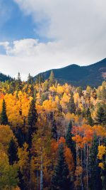 Fall Nature Mountain Wood Forest Tree Sky Summer