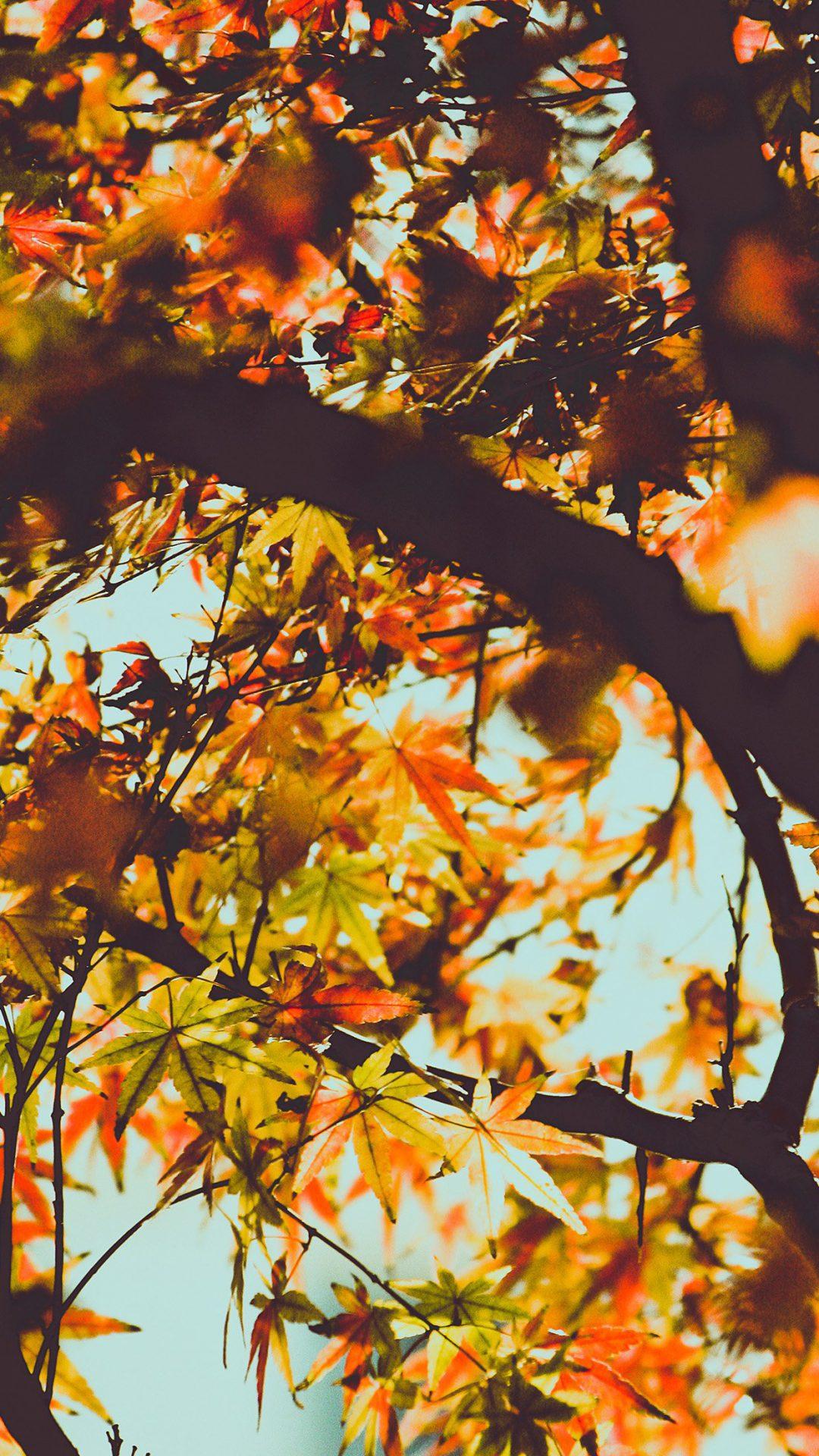 Fall Tree Leaf Autumn Nature Mountain