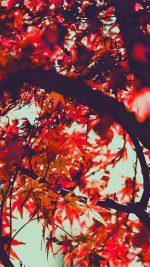Fall Tree Leaf Autumn Nature Mountain Red