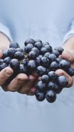 Farmer Food Grapes Fruit Nature Bokeh