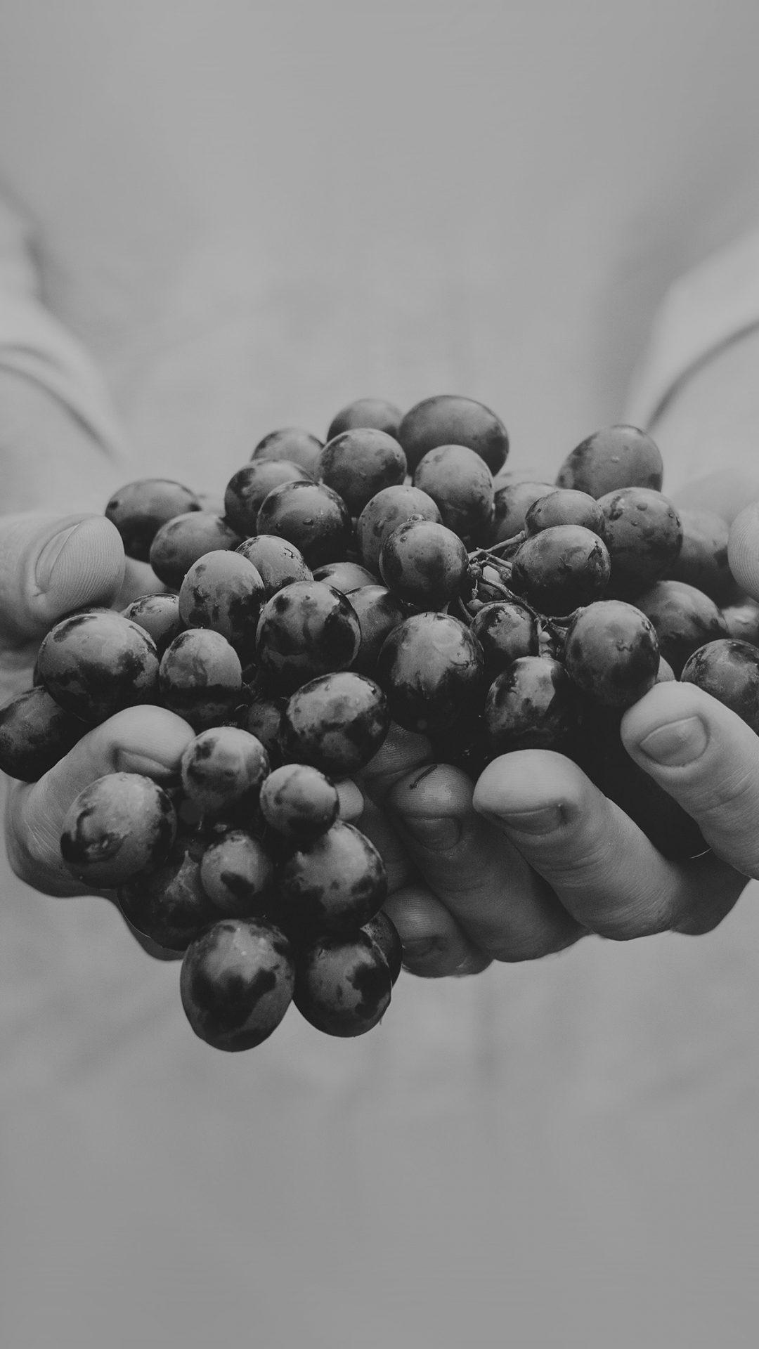 Farmer Food Grapes Fruit Nature Bokeh Dark Bw