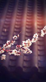 Flower Blossom Spring Vignette Flare Fun Nature