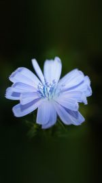Flower Blue Spring New Life Nature Dark