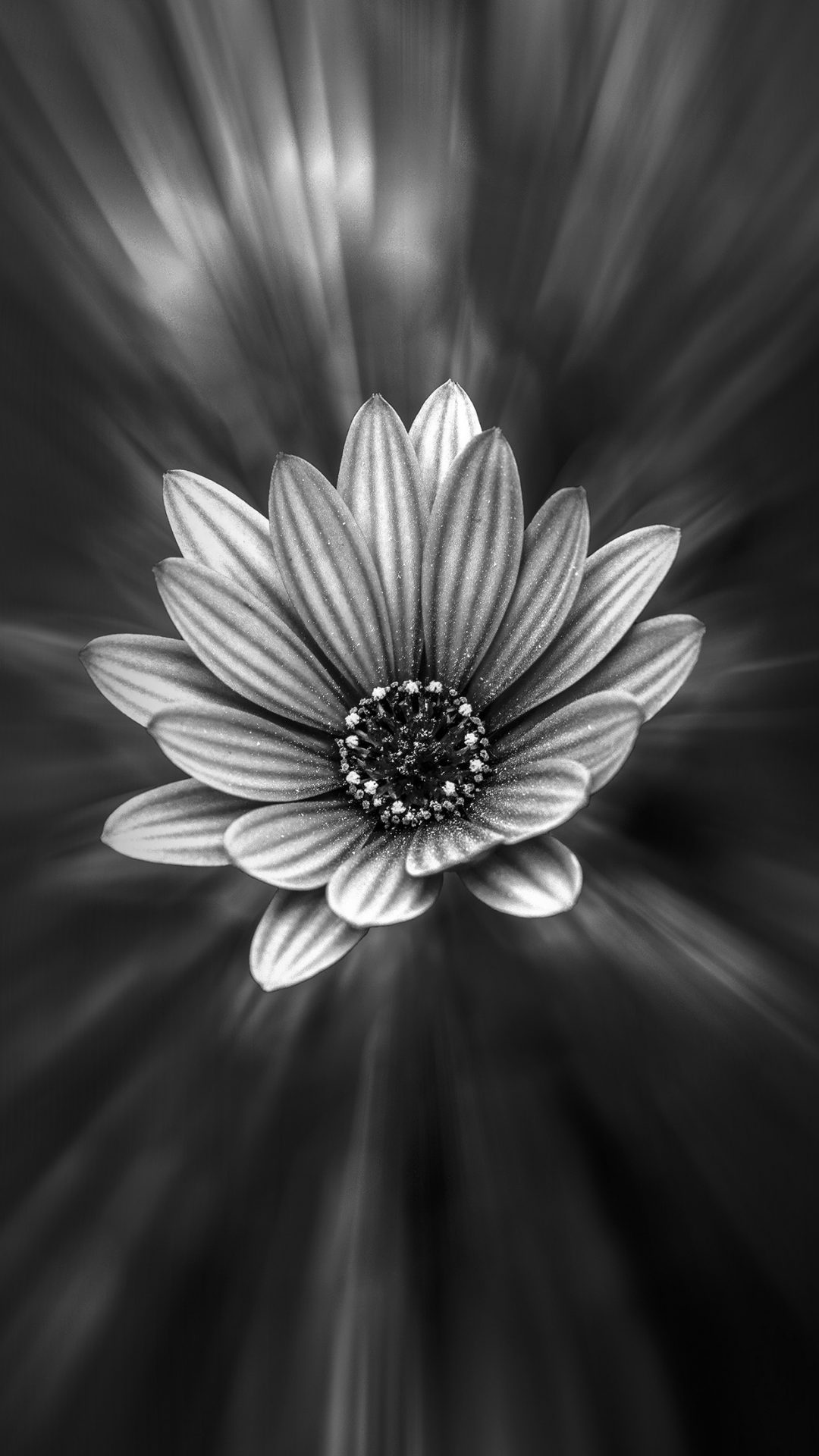 Flower Dark Black Nature Bw