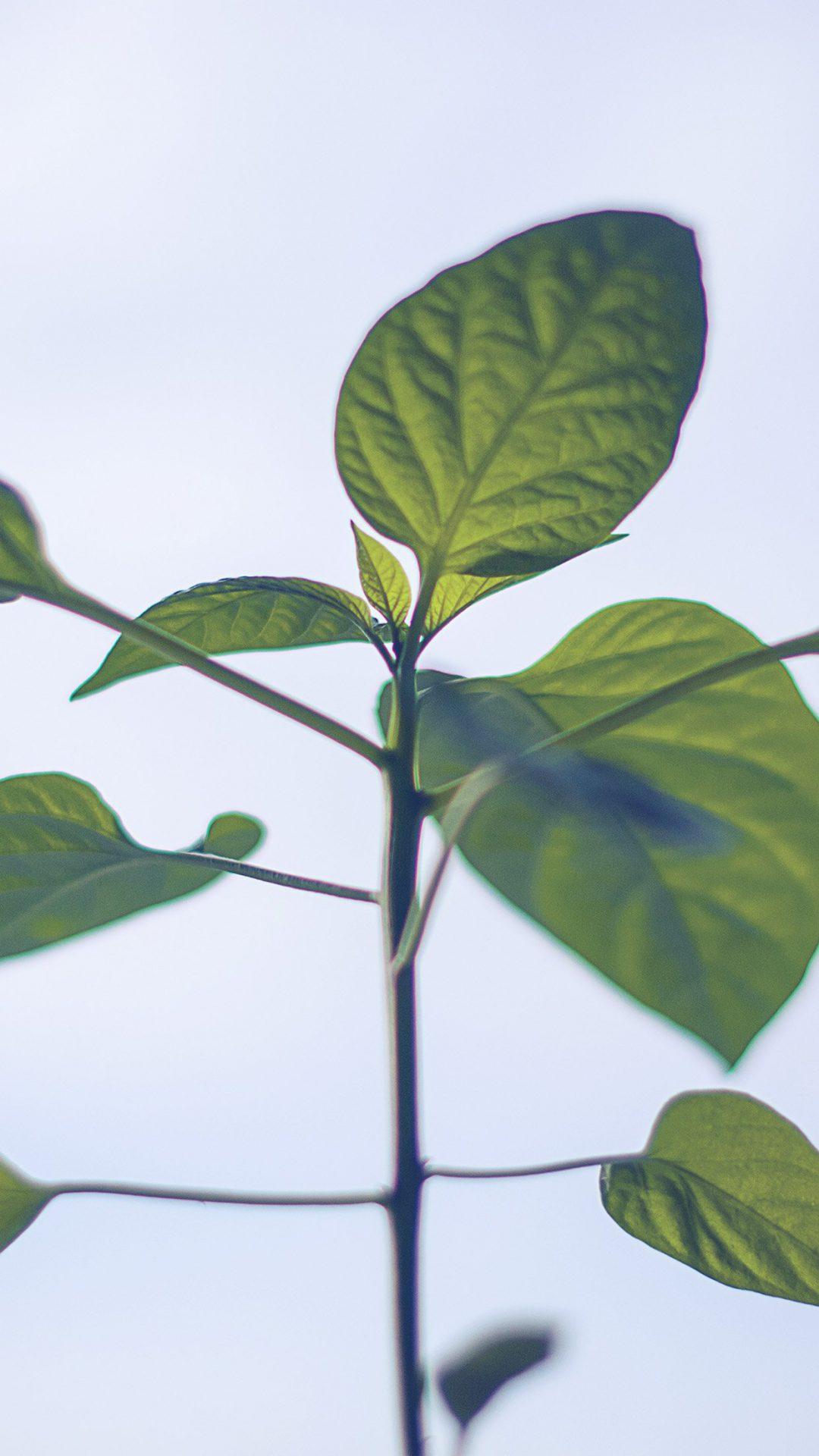 Flower Leaf Green Simple Minimal Nature