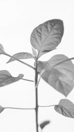 Flower Leaf Simple Minimal Nature Bw