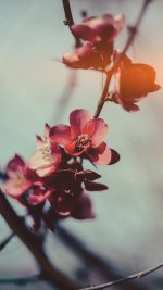 Flower Nostalgia Tree Spring Blossom Nature Flare