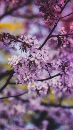 Flower Pink Blue Nature Bokeh Tree Sprin