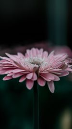 Flower Pink Calm Nature Bokeh