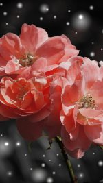 Flower Pink Snow Nature Art