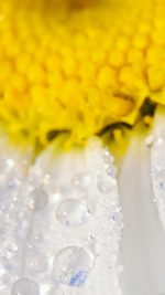 Flower Raindrop Yellow Nature