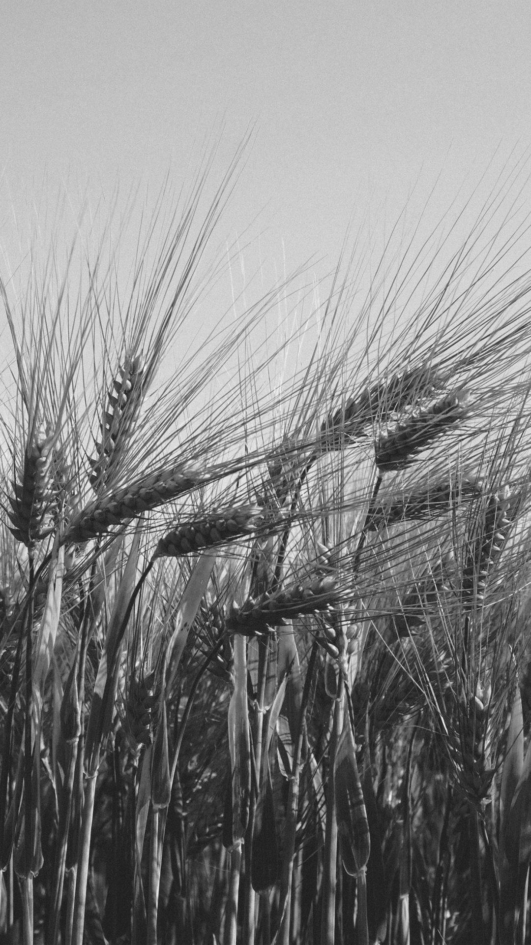 Flower Reed Food Nature Bw Dark