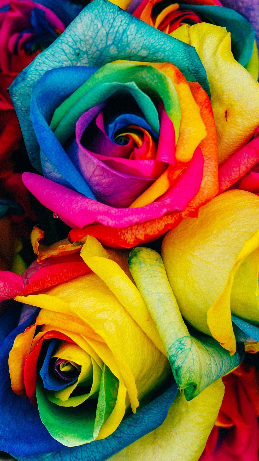 Flower Rose Color Rainbow Art Nature