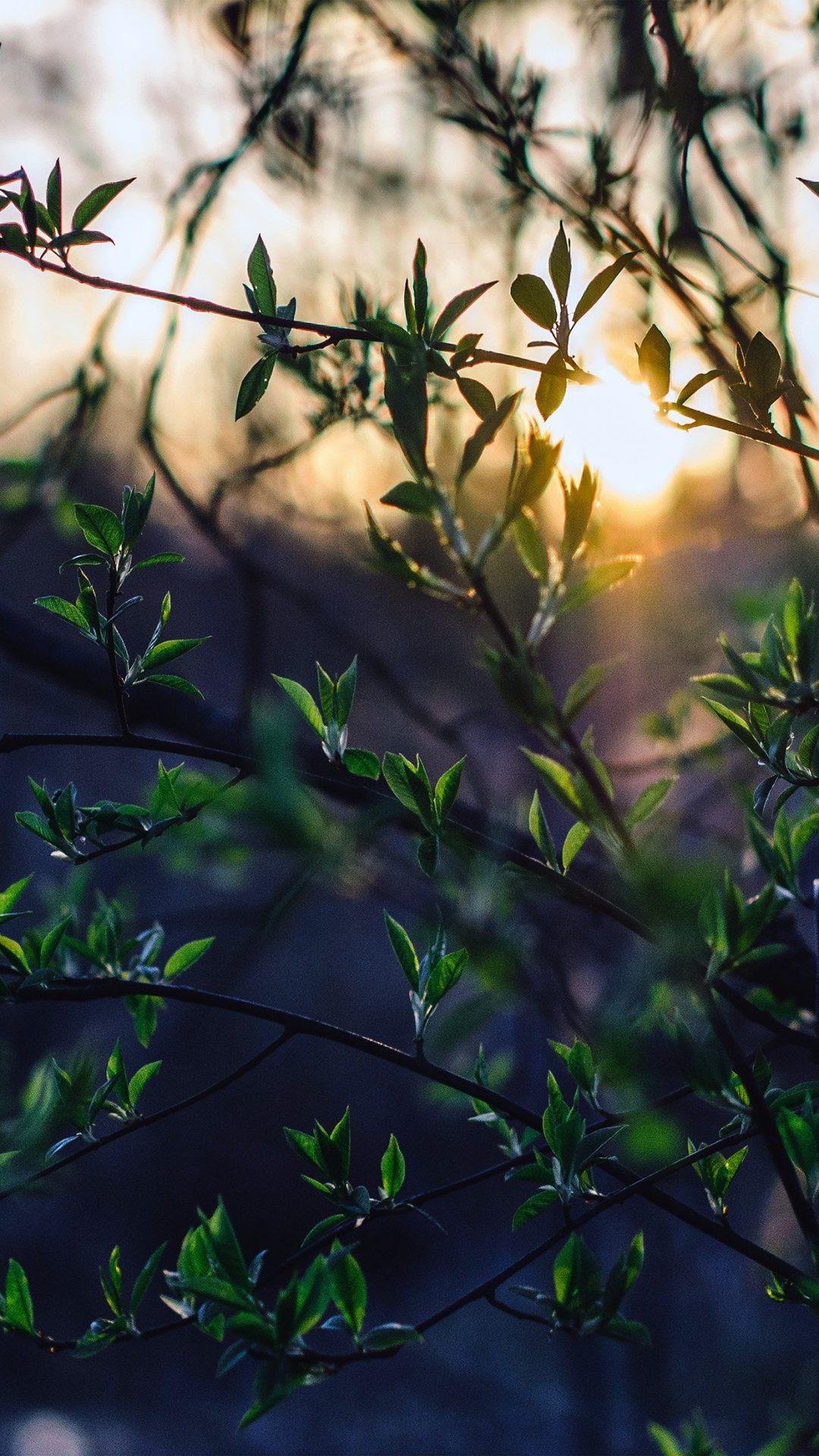 Flower Tree Sunset Nature
