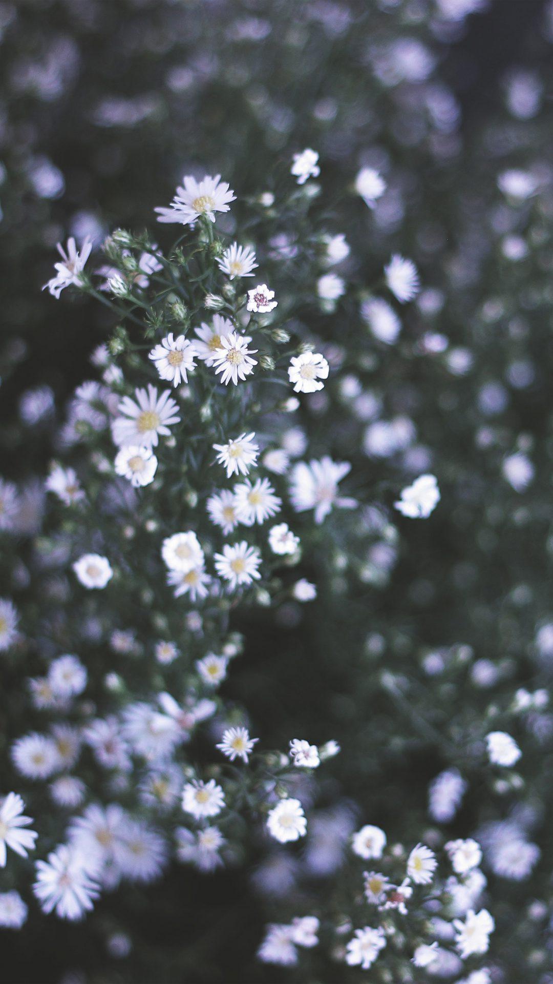 Flower White Spring Nature