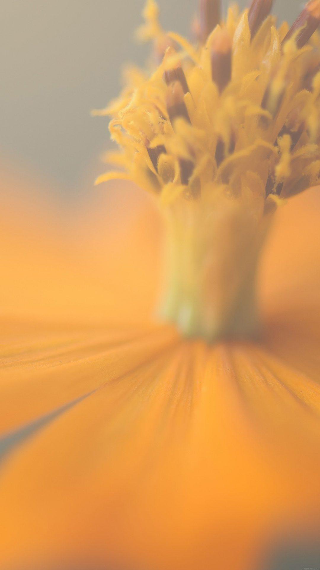 Flower Yellow Nature