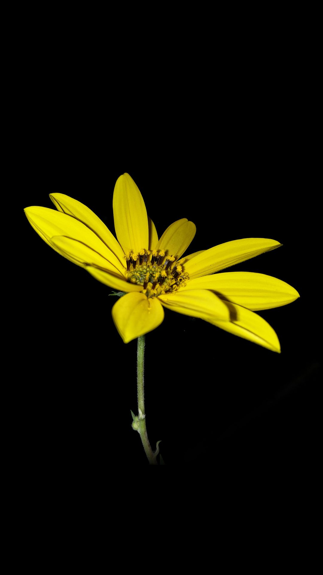 Flower Yellow Nature Art Dark Minimal Simple