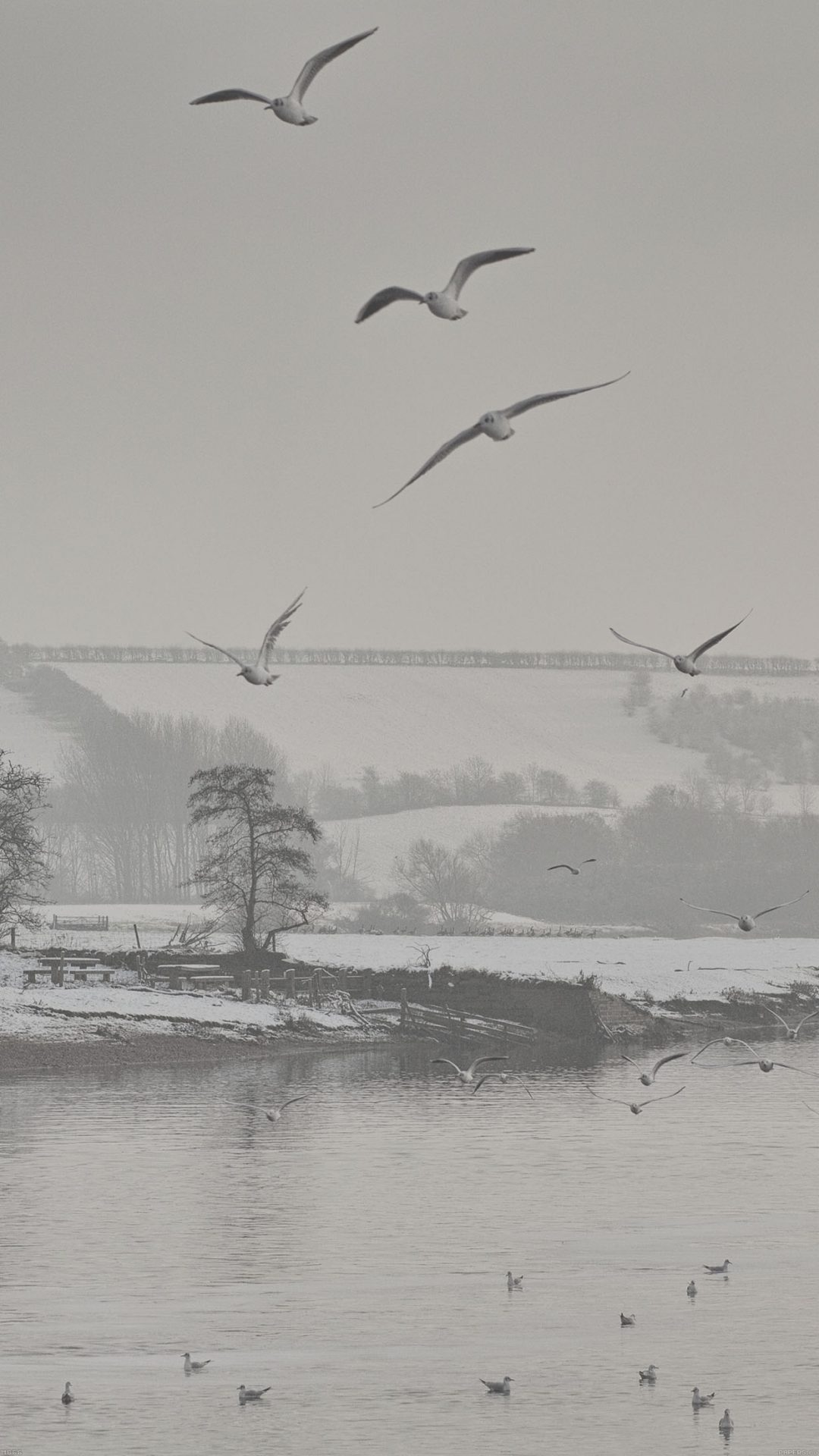 Fly Birds Snowy River Winter Lake Nature