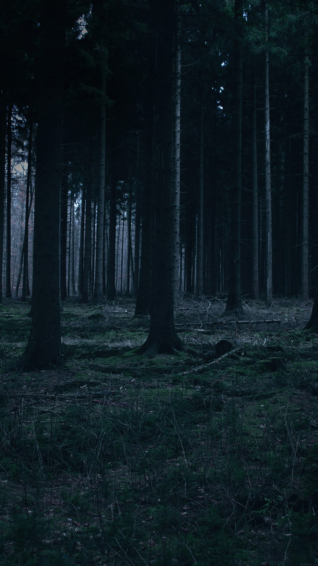 Fashion style Forest Dark wallpaper for lady