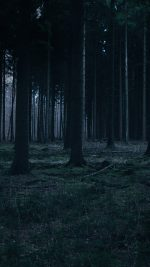 Forest Dark Night Trees Nature