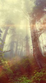 Forest Wood Fog Flare Red Nature Green