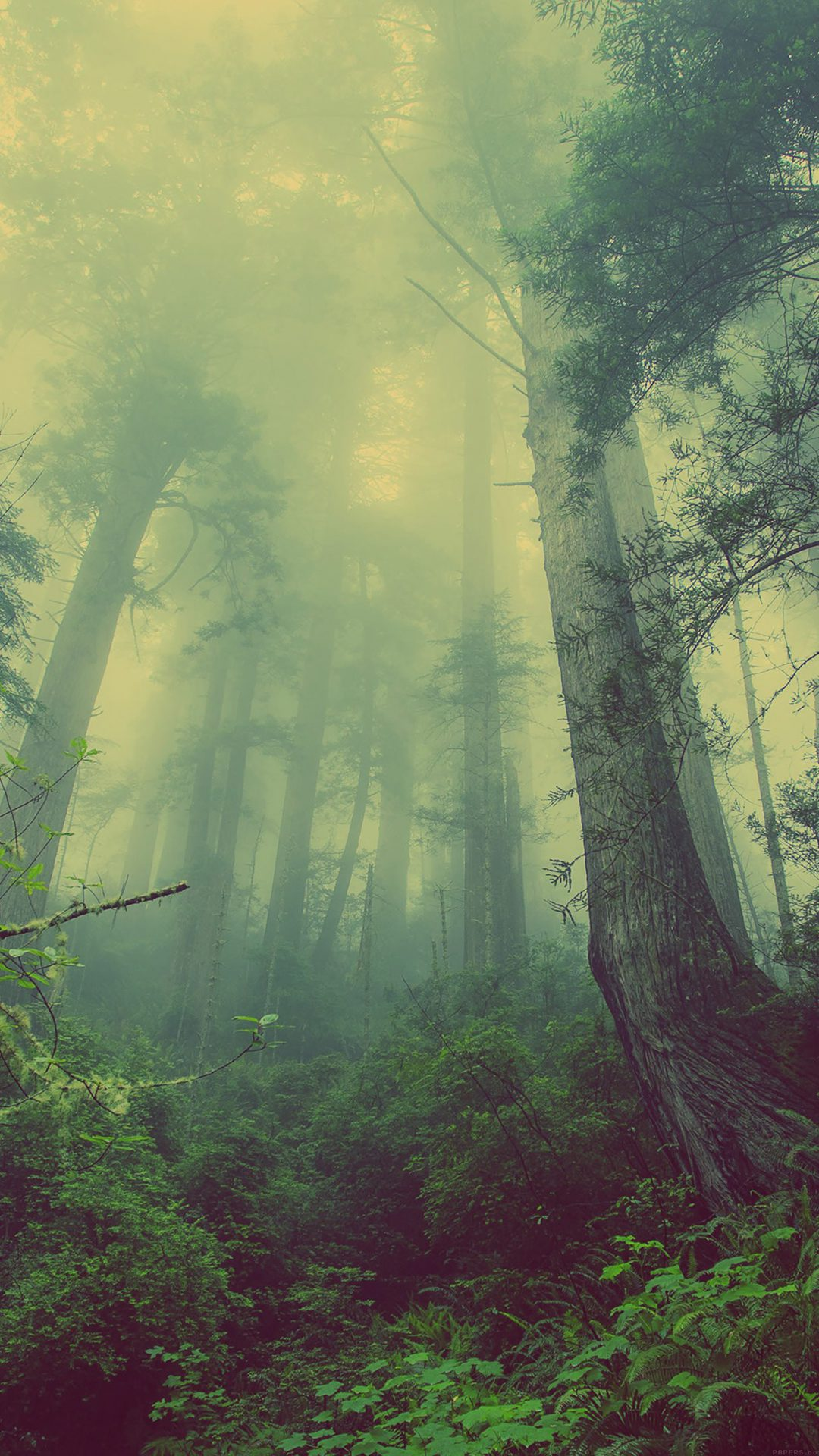 Forest Wood Fog Nature Green