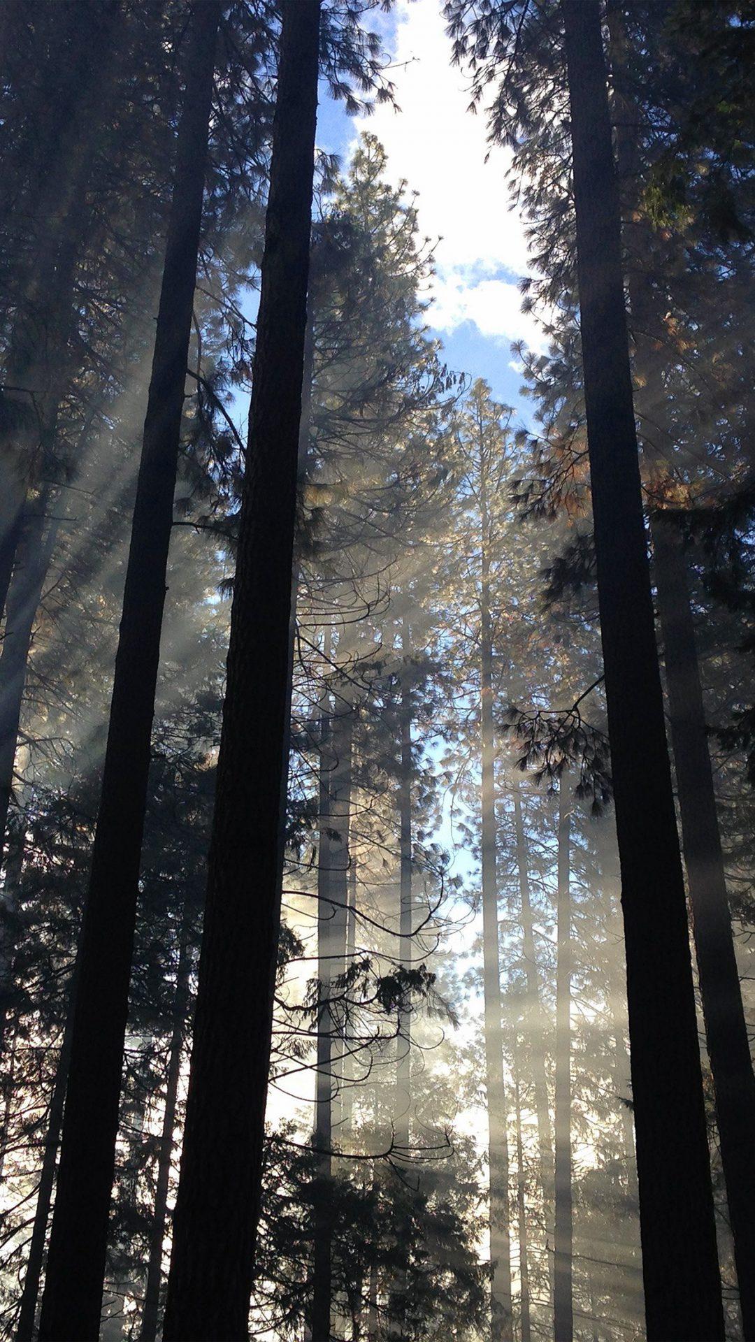 Forest Wood Tree Light Summer Nature