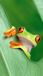 Frog Leaf Nature