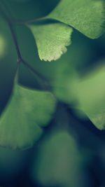 Good Luck Blue Clovers Leaf Nature