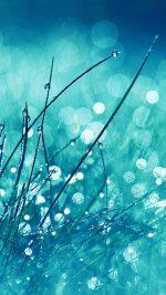 Grass Dew Flower Nature