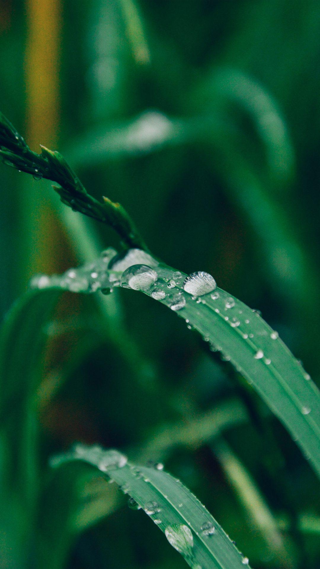 Grass Drop Water Rain Nature Forest