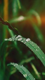 Grass Drop Water Rain Nature Forest Flare
