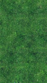 Grass Texture Nature Pattern