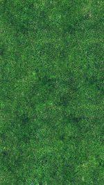 Grass Texture Nature Pattern